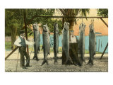 Hanging Fish, St. Petersburg, Florida Posters