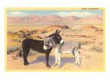 """""""Lieblinge der Wüste"""", aneinandergeschmiegte Esel Poster"""