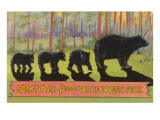 Greetings from Yellowstone National Park, Bears Prints