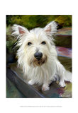Little Westie Art by Robert Mcclintock