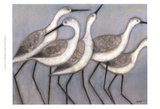 Shore Birds II Print by Norman Wyatt Jr.