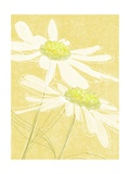 Daisies in Gold Posters