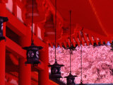 Heian Shrine in Spring, Shinto, Kyoto, Japan Photographic Print by Shin Terada