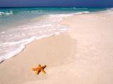 Maresa Pryor - Gulf Island National Seashore, Santa Rosa Island, Florida Fotografická reprodukce
