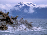 Stellar Sea Lions, Glacier Bay, Alaska, USA Photographic Print by Gavriel Jecan