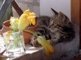 A Kitten Playing with Flower, August 1997 Photographic Print