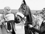 Grand National Winner Red Rum with Trainer Ginger Mccain Drinking from Bucket Lámina fotográfica