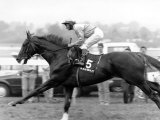 Spt. Horse Racing, Race Horses Ini. July 1989 Reprodukcja zdjęcia