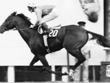Alleged Being Riden by Lester Piggott Passing the Winning Post at the Prix de Larc Fotografisk tryk