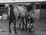 Arkle at the Stables of Tom Dreaper, February 1966 Photographic Print