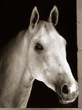 Desert Orchid Racehorse with His Head Sticking Out of the Stable Door Photographic Print