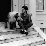 Paul Mccartney Singer with the Beatles at His St John's Wood House with His Pet Dog June 1967 Photographic Print