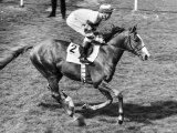 Be My Guest Ridden by Lester Piggott in the 1977 Derby Fotografisk tryk