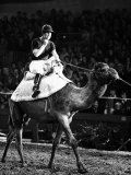 Prince of Wales Rides Camel at London Olympia in December 1979 Photographic Print