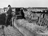 Peat Cutting, March 1954 Photographic Print