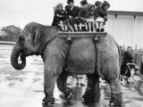 Children Ride on the Back of an Elephant at Belle Vue Manchester, May 1957 Photographic Print