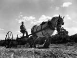 Haymaking at Birling, June 1944 Photographic Print