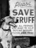 Scruff Beside a Placard Place Outside Home, Asking Friends to Add Signatures to the Petition Photographic Print