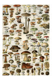 Champignons Mushrooms, Art Print
