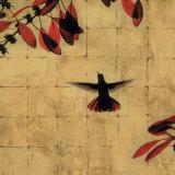 Colibri II Affiches par Chris Donovan