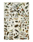 Insectes Prints