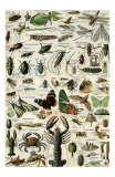 Arthropodes Prints