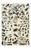 Insectes Print