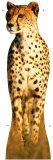 Cheetah Cardboard Cutouts