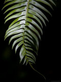 Close View of a Sword Fern Photographic Print by Taylor S. Kennedy