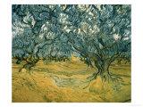 Vincent van Gogh - Olivovníky Digitálně vytištěná reprodukce