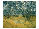 Olivenbäume Poster von Vincent van Gogh