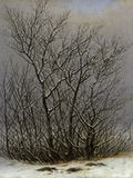 Bushes in the Snow Affiche par Caspar David Friedrich