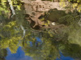 Reflections in West Clear Creek, Arizona Photographic Print by David Edwards