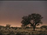 Twilight Landscape in the Kalahari Gemsbok National Park Photographic Print by Mattias Klum