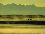 Horses Graze in Morning Mist on a River in the Darhad Valley Photographic Print by Gordon Wiltsie