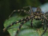 Spider in Rain Forest Photographic Print by Mattias Klum