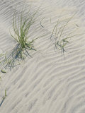 Animal Tracks on the Sand Dunes Photographic Print by Vlad Kharitonov