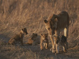 An African Lioness and Her Three-Month Old Cubs Photographic Print by John Eastcott & Yva Momatiuk