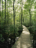 The Boardwalk Nature Trail in Great Swamp National Wildlife Refuge, New Jersey, Photographic Print