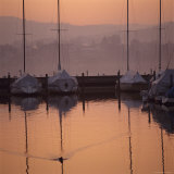 Duck Swims Near Anchored Sailboats at Sunrise Photographic Print by David Pluth