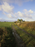 Dirt Road Leading to a Farmhouse on the West Coast of Ireland Fotografisk tryk af Gina Martin