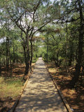Boardwalk in the Woods at a Wild Horse Reserve Photographic Print by Vlad Kharitonov