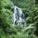 Waterfall in a Rainforest in Nyungwe National Park Photographic Print by David Pluth
