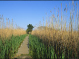 Wooden Nature Trail in the Marshland of Cape May Point State Park Photographic Print by Skip Brown