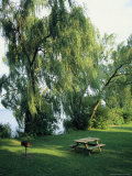 Willow-Lined Lakeside Picnic Area in Cayuga Lake State Park Photographic Print by Skip Brown