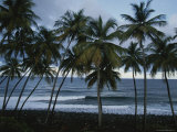 Row of Palm Trees Lines the Beach Shore Photographic Print by Michael Melford