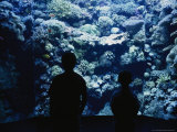 Silhouette of Two Boys at the Denver Aquarium Photographic Print by Taylor S. Kennedy