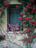 Window on Stucco Wall Surrounded by Red Roses with Petunia Flower Box Fotoprint van Todd Gipstein
