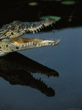 Crocodile with an Open Mouth Casts a Reflection on Calm Water Photographic Print by Steve Winter