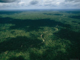 Aerial View of a River Cutting Through Dense South American Forest Photographic Print by Steve Winter